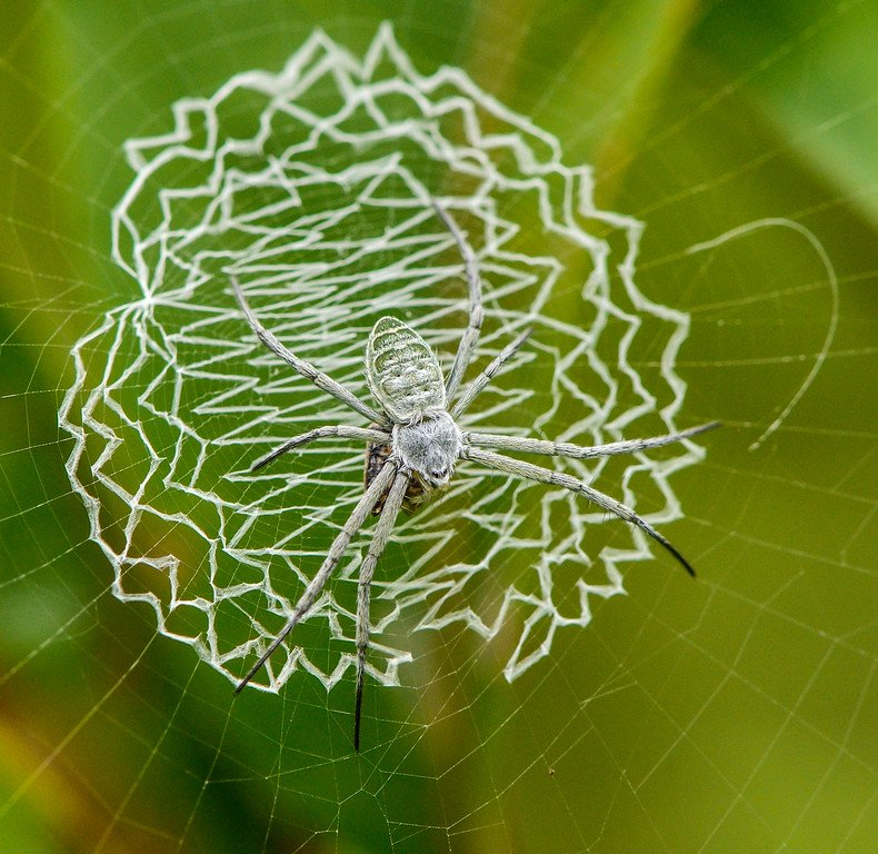 Orb-Weaver-Spider-web-decoration