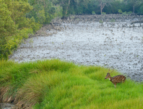 Sundarbans – buzzing with activity at low tide