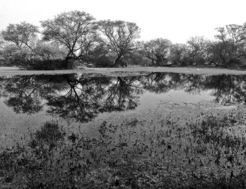 Monochrome moods from Bharatpur