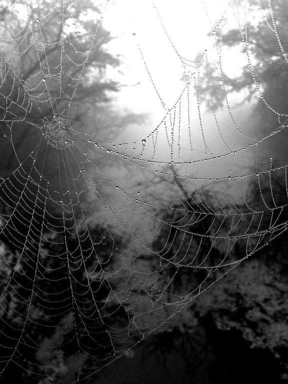 Spider-web-with-dew-overlooking-canal-Bharatpur
